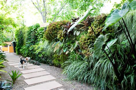 How to Plant a Lush Living Wall - Sunset Magazine - Sunset